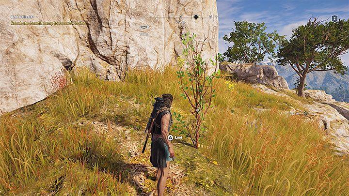 Оливковое дерево приобретается благодаря взаимодействию с маленькими деревьями. На приведенном выше рисунке показан пример. Как получить крафт-материалы в Assassins Creed Odyssey Game?  - Часто задаваемые вопросы - Assassins Creed Odyssey Game Guide