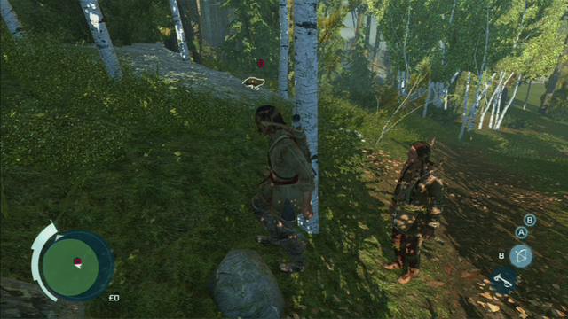 After the conversation, head to the green zone and eventually two red dots marking rabbits will appear - Sequence 4 - Hunting Lessons - Walkthrough - Assassins Creed III - Game Guide and Walkthrough