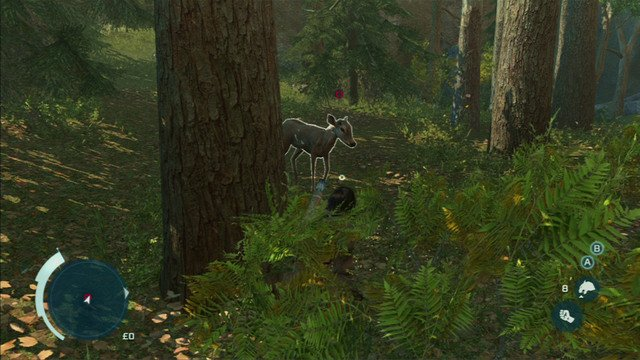 When the animal gets close enough, you will be able to kill them bare-handed (choose this option from the inventory) - Sequence 4 - Hunting Lessons - Walkthrough - Assassins Creed III - Game Guide and Walkthrough