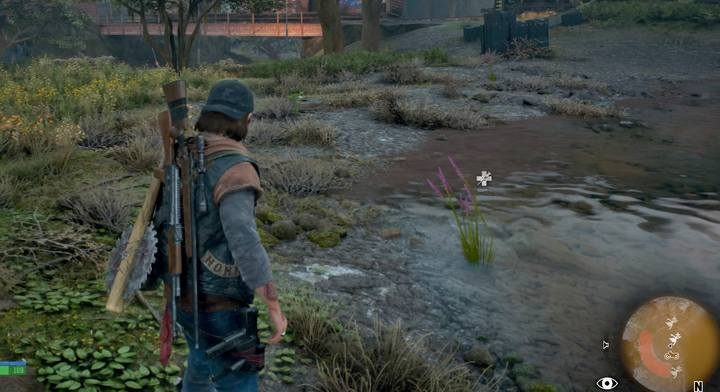 Lavender can be found near water - Hes my Brother | Days Gone Walkthrough - Main storyline - Days Gone Guide