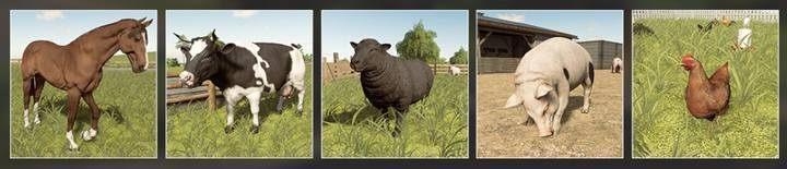 Farm animals | Husbandry in Farming Simulator 19 - Farming