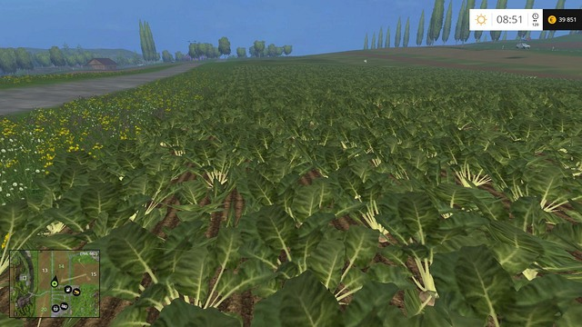 Sugar beets ready to be harvested. Time to get rid of the leaves. - Sugar beets and potatoes - Plants - Farming Simulator 15 Game Guide