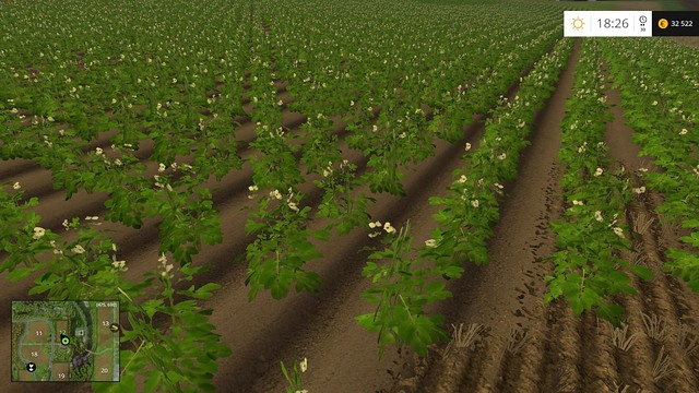 Young potatoes will soon ripen. - Sugar beets and potatoes - Plants - Farming Simulator 15 Game Guide