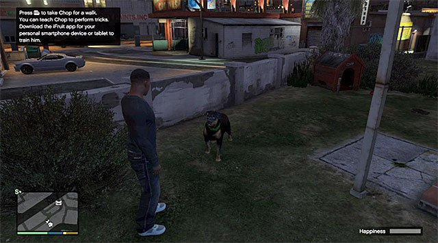 Two basic modes of interaction with the dog is walking him and throwing him a ball - Chop - Friendships and Love Affairs - Grand Theft Auto V Game Guide