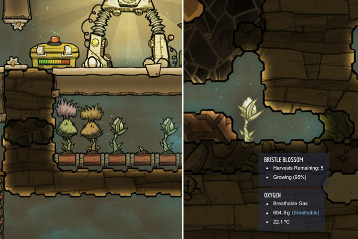 Bristle Blossom - Harvestable - Plants - Oxygen Not Included Game Guide