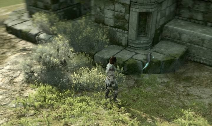 Lizards are often encountered on fields and meadows, but only some of them will help you attain your goal - How do I increase my stamina in Shadow of the Colossus? - FAQ - Shadow of the Colossus Game Guide