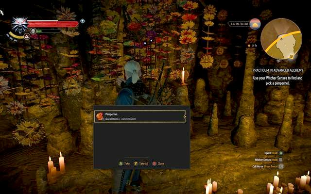 Pimpernel in succubus cave - Practicum in Advanced Alchemy - side quest - Kaer Trolde - The Witcher 3: Wild Hunt Game Guide & Walkthrough